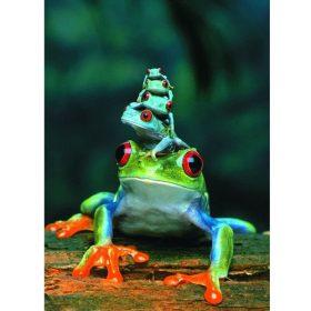 פאזל 1000 חלקים איכותי מבית EUROGRAPHICS דגם 6000-3004 Red-Eyed Tree Frog
