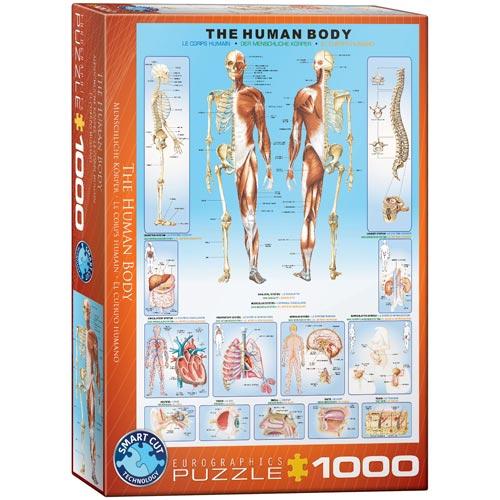 פאזל 1000 חלקים מבית אירוגרפיק בחיתוך SMART CUT גוף האדם