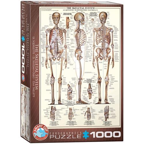 פאזל 1000 חלקים מבית אירוגרפיק בחיתוך SMART CUT שלד האדם
